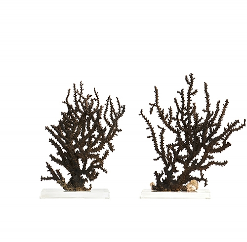 Pair of Black Octopus Corals on Lucite Bases