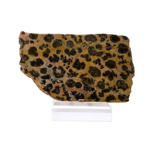 Large Slab of Rare Stromatolite on Lucite Base