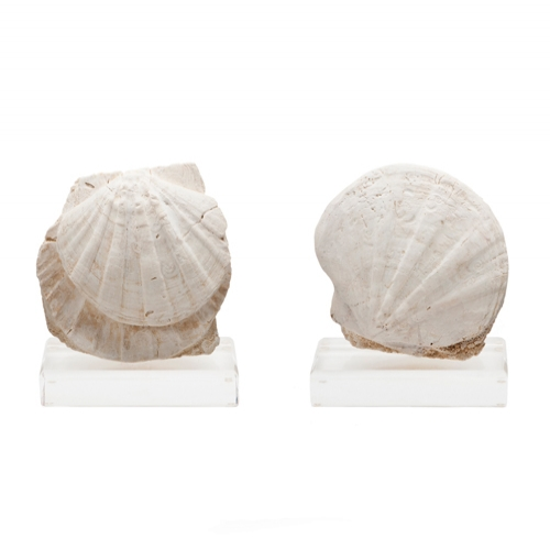 Pair of Pecten Fossils on Lucite Bases