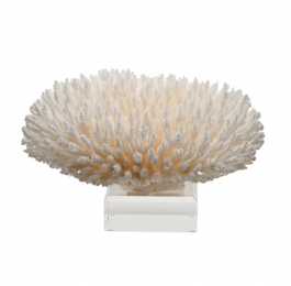Table Coral on Lucite Base