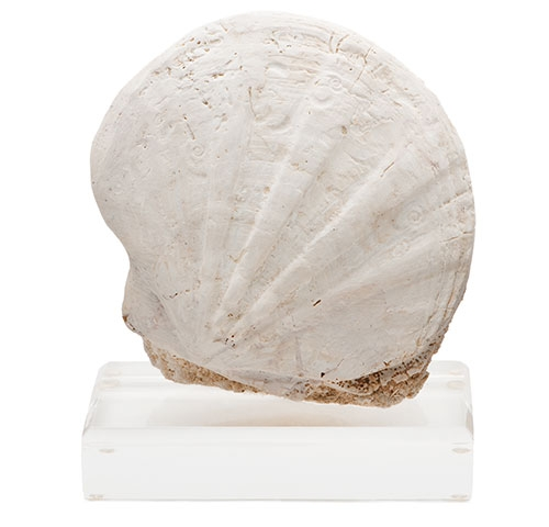 Pair of Pecten Fossils on Lucite Bases pecten-fossil_right.jpg